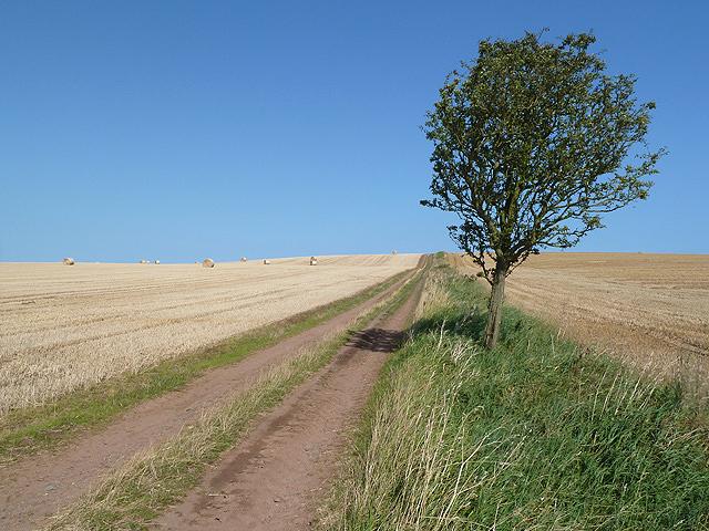 Berwickshire farmland