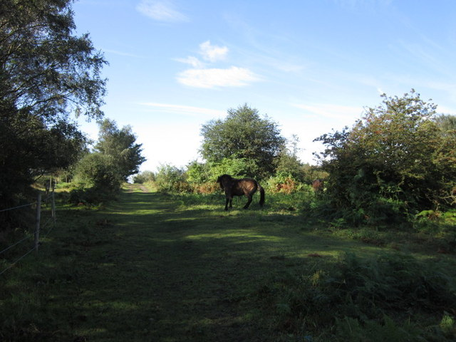 Horses on Roxby and Elsham Grazings
