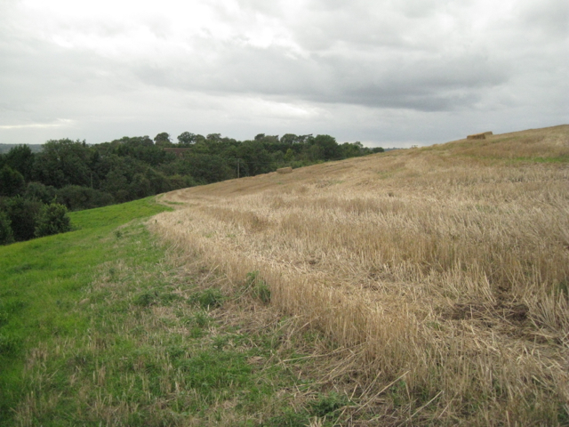 Edge of a wheatfield south of Lower Skilts