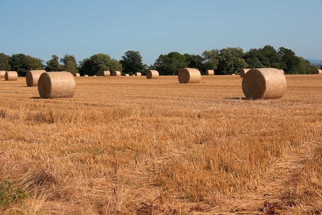 Bales in a Field off Monk Gardens Lane