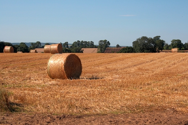 Bales in a Field off High Lane