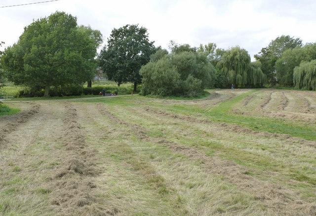 Devon Pastures