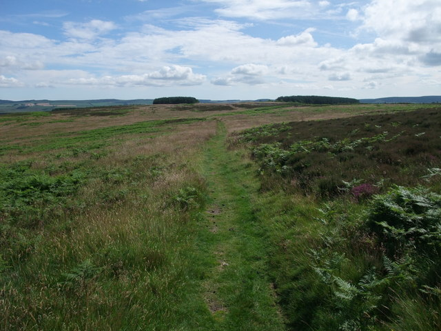 St Cuthbert's Way on Weetwood Moor