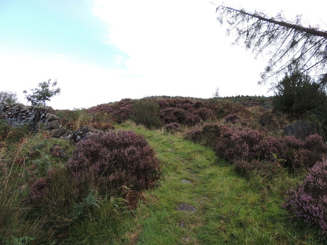 Southern Upland Way near Glenwhan Moor