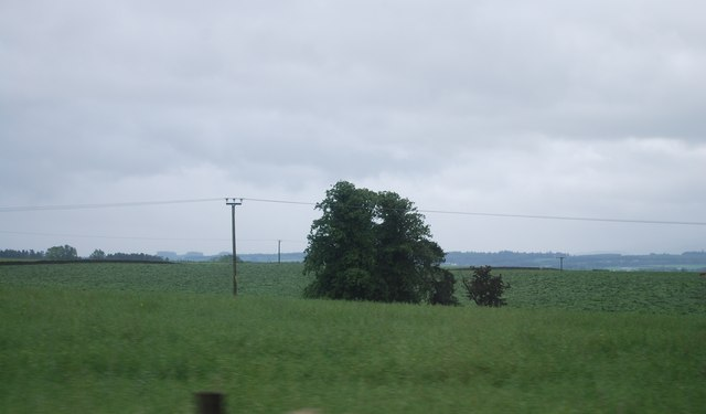 Tree in a field of cereals