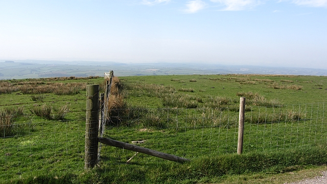 Fyldon Common