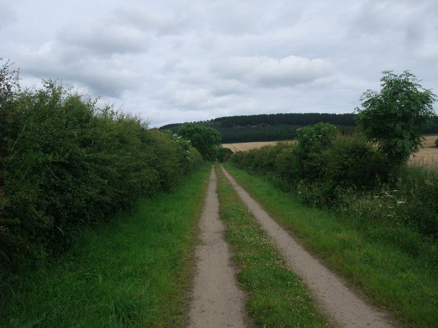 St Cuthbert's Way heading towards the plantation on Cockenheugh