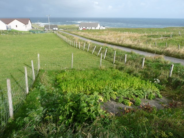 A healthy wee veg patch at Cliaid