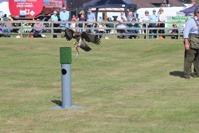 Falconry display, Laughton Show