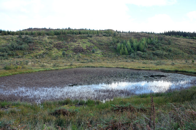 Lochan in the forestry