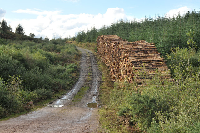 Logging and forestry road near Millhouse