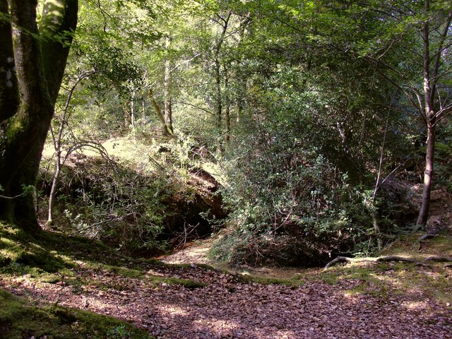 Shepherd's Gutter, New Forest