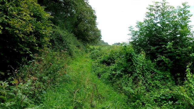 Overgrown bridleway