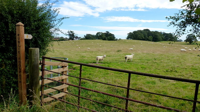 Footpath across pasture