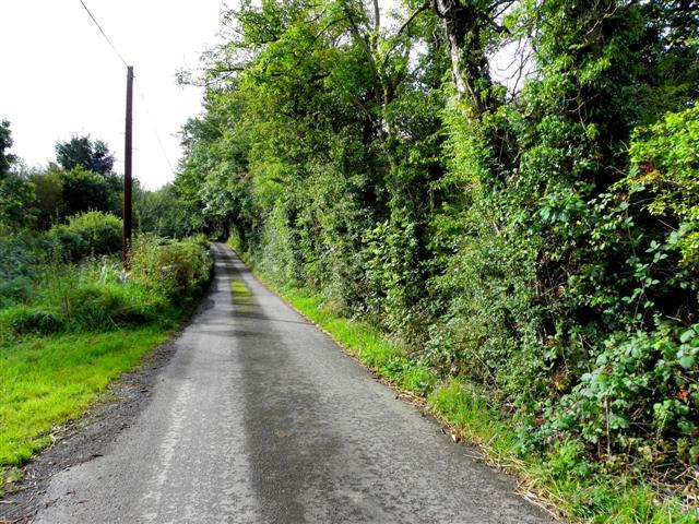 Road at Carolina