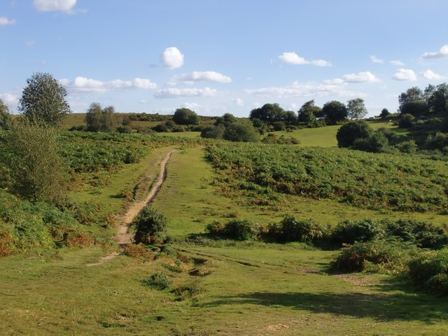 Margins of the New Forest, near Frogham
