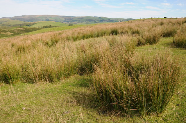 Upland grazing near Pawl-hir