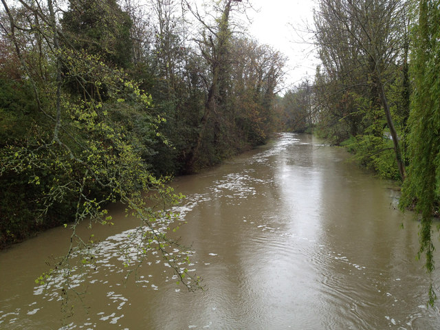 River Leam in spate, 1 May 2012 (2 of 2)