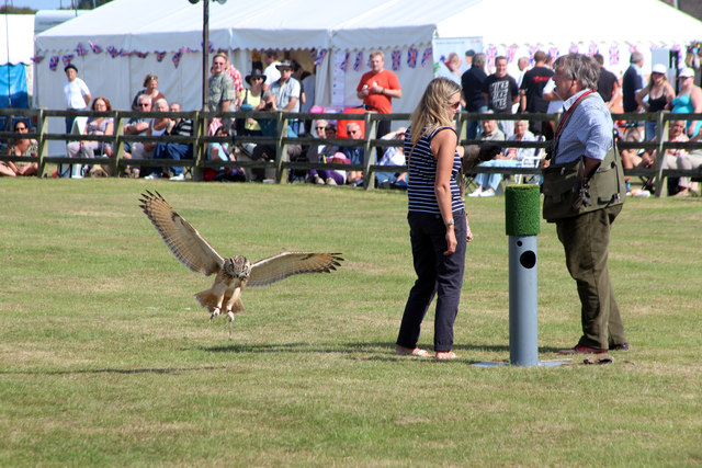 Owl display, Laughton Show