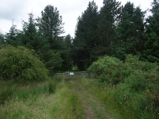St Cuthbert's Way, St Oswald's Way, and the Northumberland Coastal Path approaching Shiellow Wood
