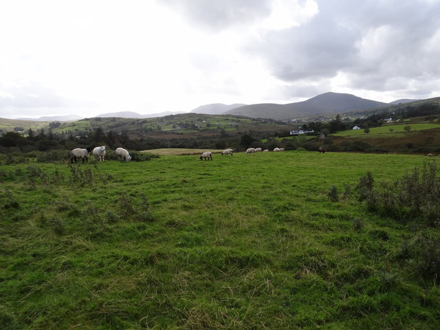 Fields, sheep and hills