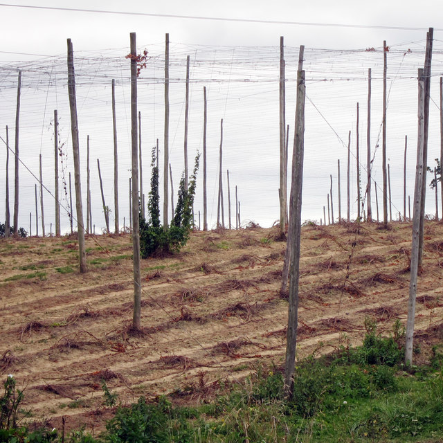 Cleared hop field at Hoad's Farm