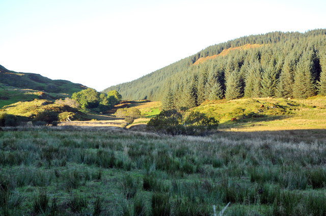 Forestry near Ardshellach