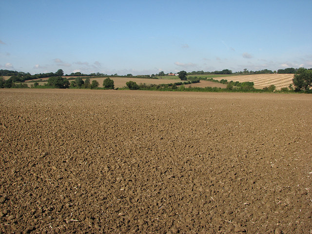 Over fields to Willingham Green