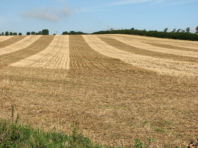 Stour Valley stubble