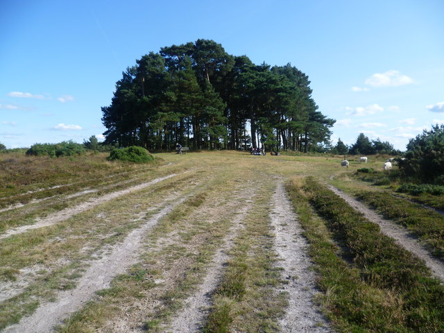 Track leading to Camp Hill Clump