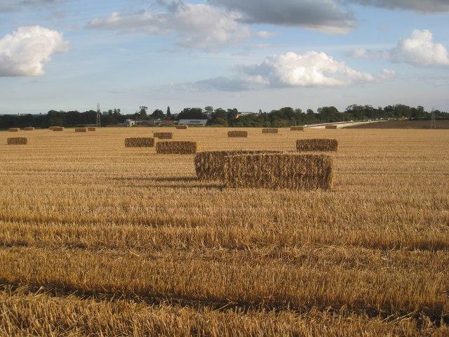 Straw bales near Skidby