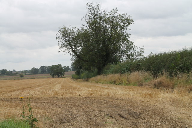 Harvested Field and Hedgerow near the A151