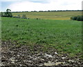 SK7221 : Muddy field near Welby Lane by Mat Fascione