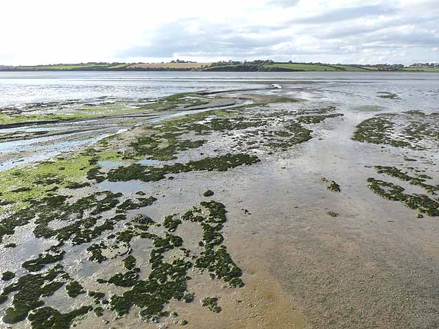 Bannow Bay at low tide