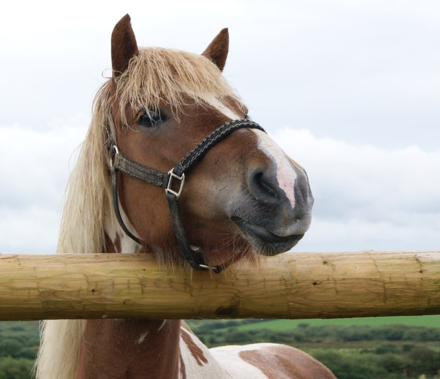 A Horse on Simpsons Hill Farm