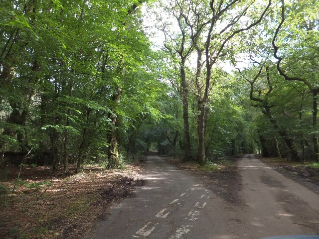 Fork of minor roads in Wiscombe Wood