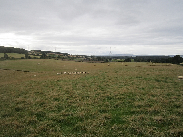 Sheep pasture, Hatton