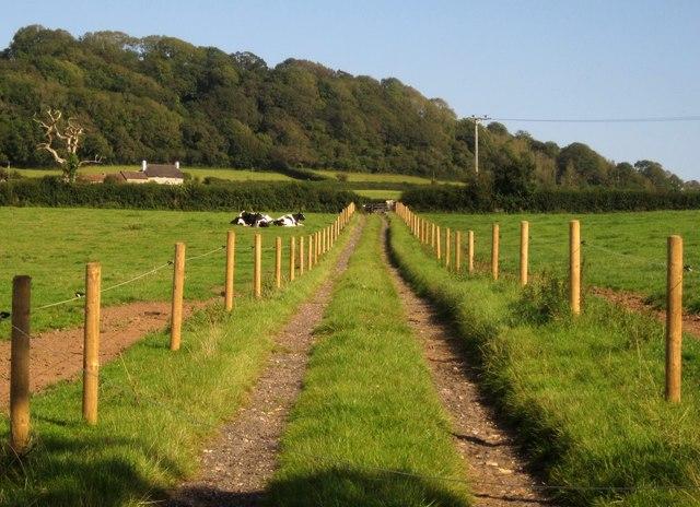 Track to Sellarswood