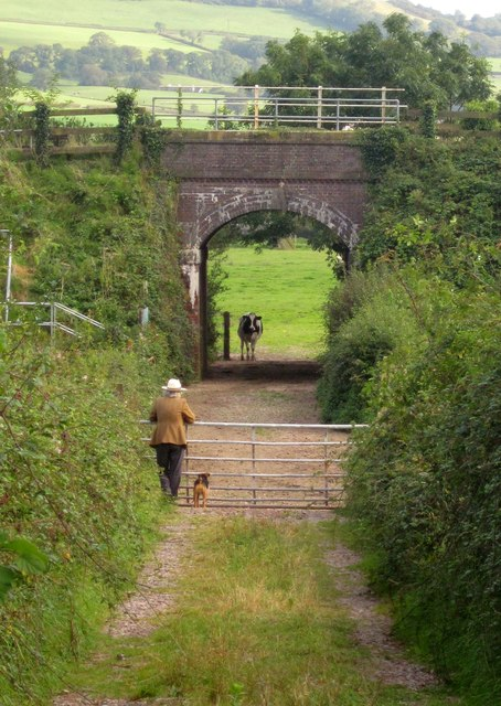 Man, dog, cow and bridge