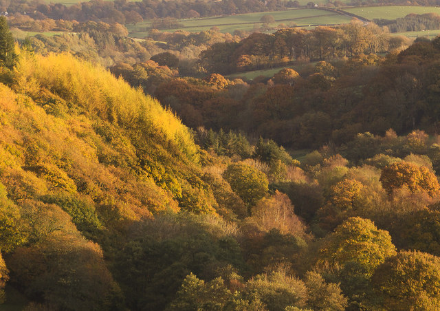 Autumn colours in Irfon Valley