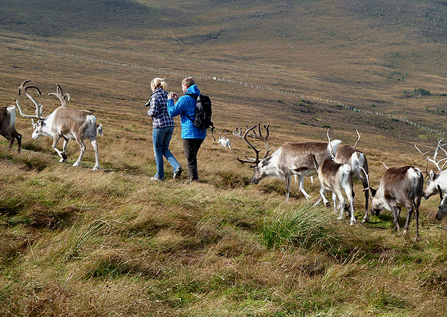 Walking with reindeer