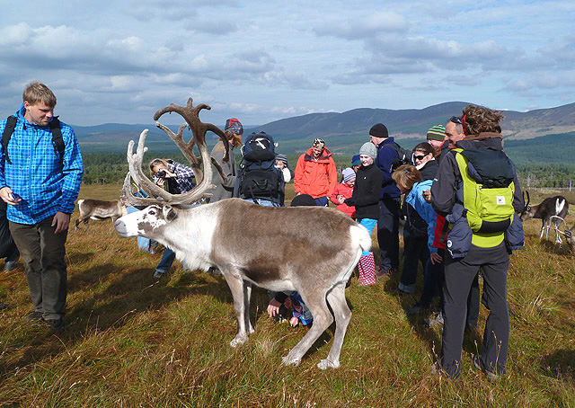 Meeting the Cairngorm reindeer