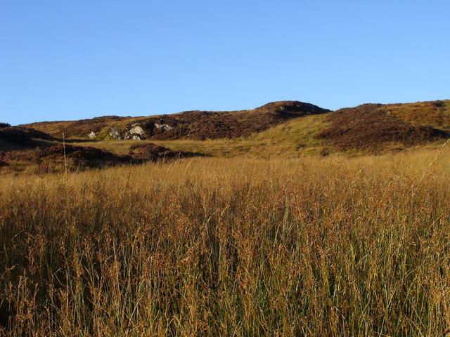 Reedy sump draining off Capull Cruaidh above Oragaig, Kintyre