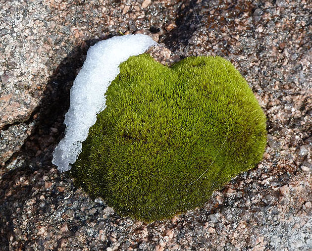 Moss and snow on granite
