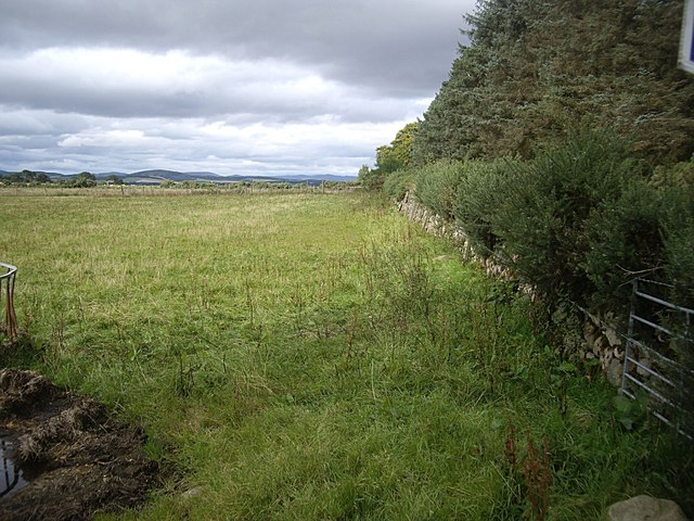 Field boundary hedge between North and South Coldstream