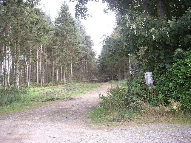A track through Drumhill Wood