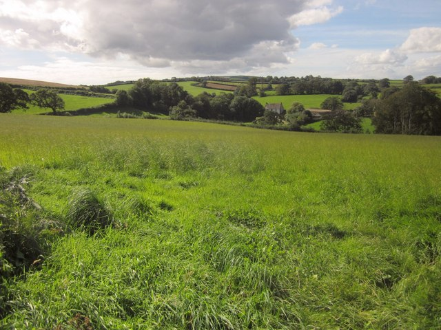 Field near Hernaford