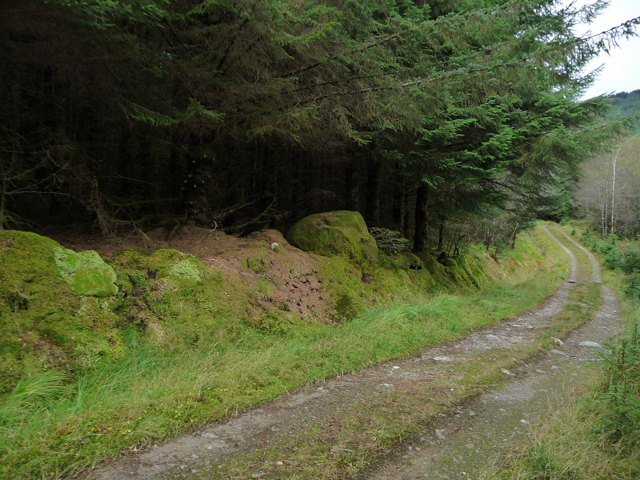 Forest track by the Allt Broighleachan