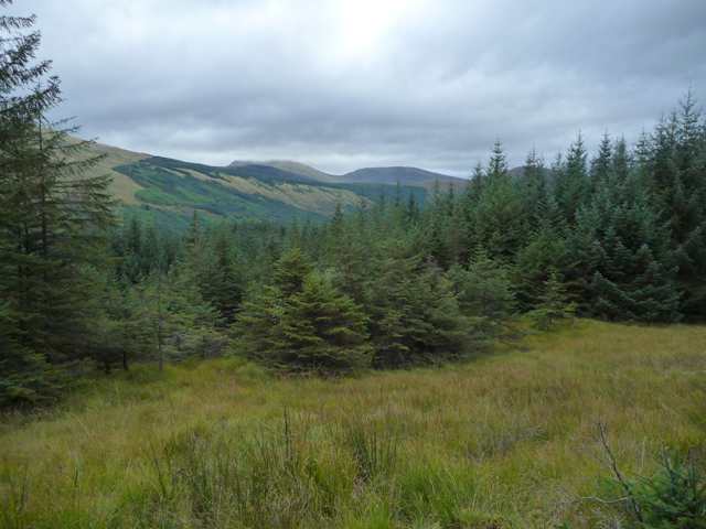 Clearing by the Allt a' Bhuirn