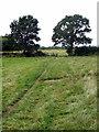 SP7633 : Bridleway toThornborough by Philip Jeffrey